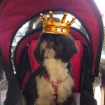 prince jesse in his chariot