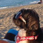 jesse at the beach