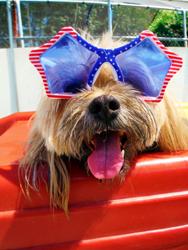 Pets Wearing Sunglasses