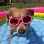 lilly rose and her doggles