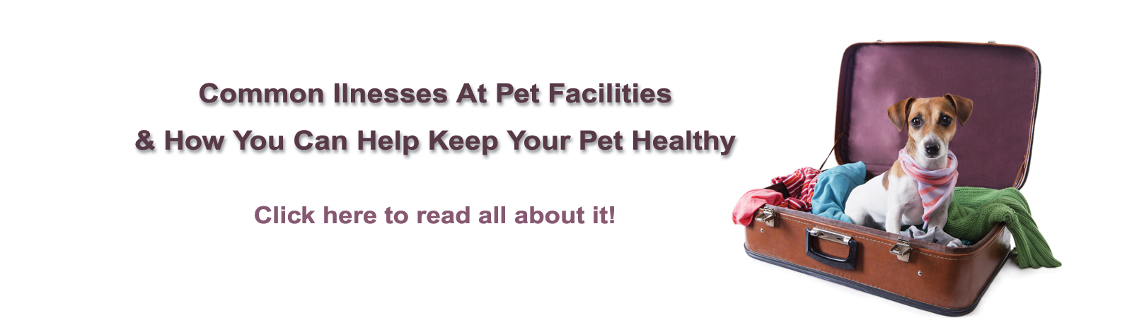 Common Illnesses At Pet Facilities & How You Can Help Keep Your Pet Healty