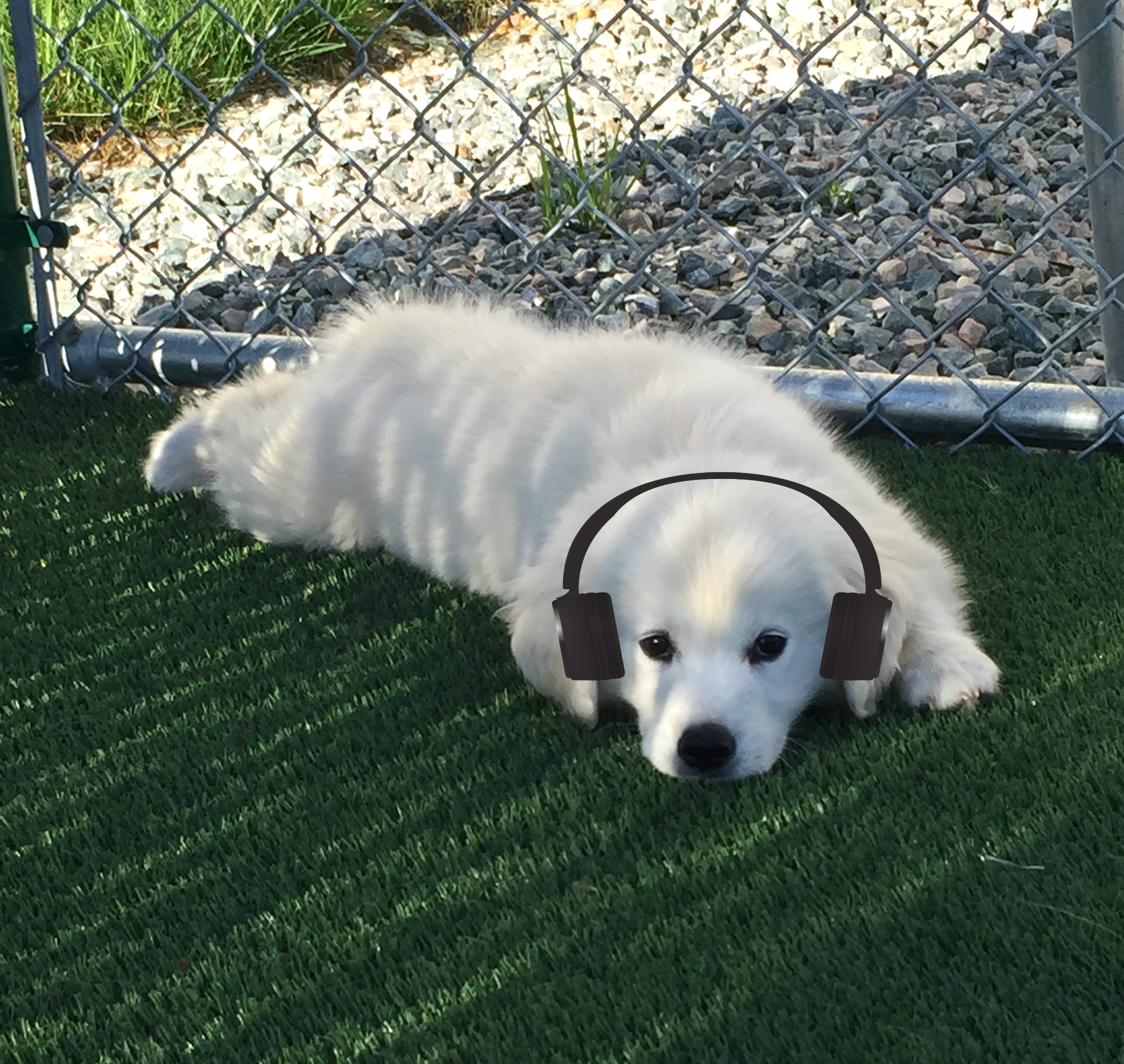 Comforting Music for pets