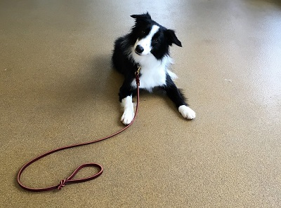 Leashes and How to Use Them