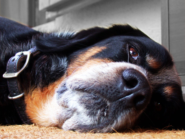 Seizures In Dogs And What To Do If Your Dog Experiences One