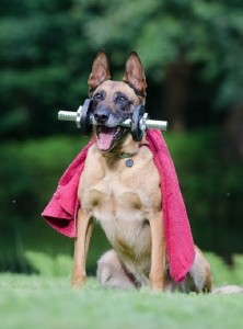 The Best Exercise Tips for your Dog 2017