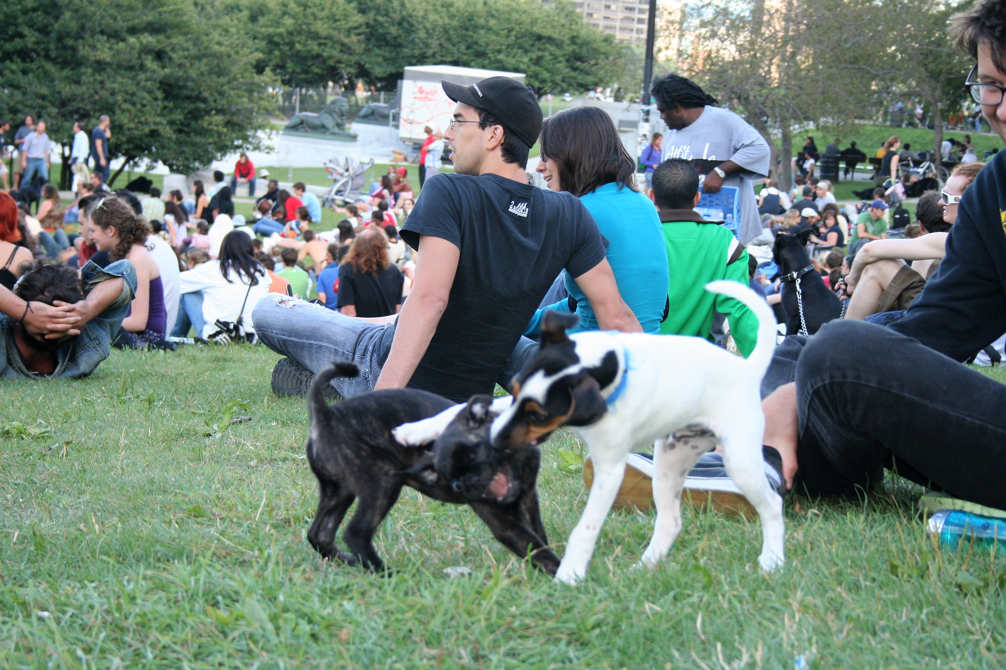 Dog Friendly Events This Summer