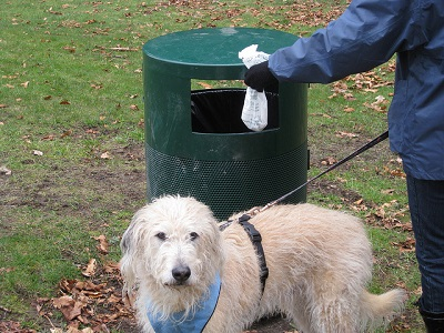 Proposal would fine dog owners for not immediately removing waste deposits