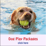 Landing Page Dog Play Button