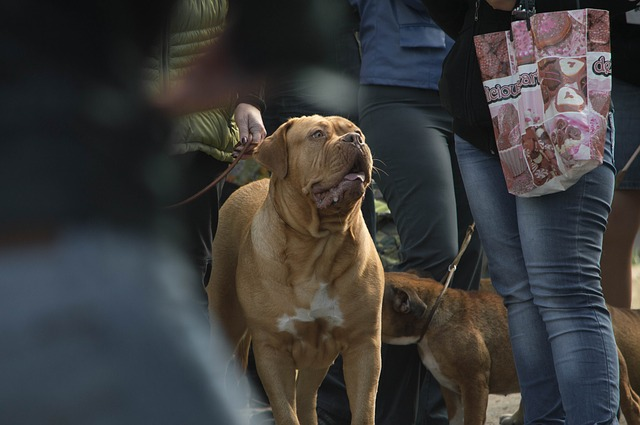A dog attending one of the dog friendly events in Richmond 2019