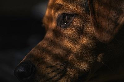 10 commandments of canine respect