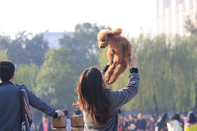 2018 Dog Friendly Events this Summer in Richmond