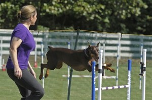 Pack Member, Dawn, practicing agility with her dobie, Willow!