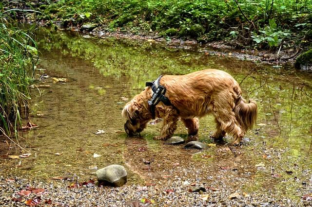 A dog walks through a shallow riverbed