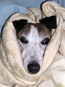 Doggie Cold