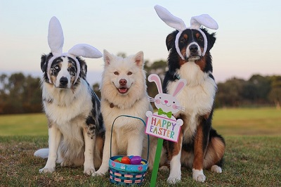 Easter foods for your dog