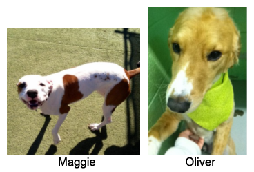Maggie_Oliver