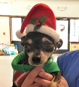 Dog Training Tips for this Holiday Season