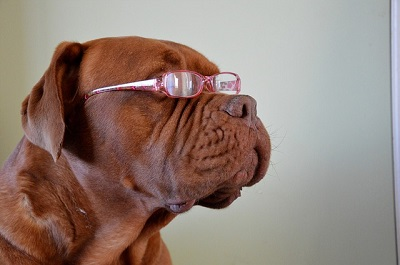 Your Dog's Vision