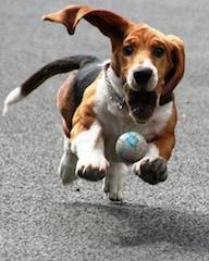 dogs obsessive behavior