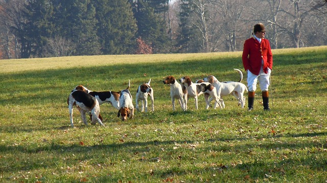 dogs-179666_640